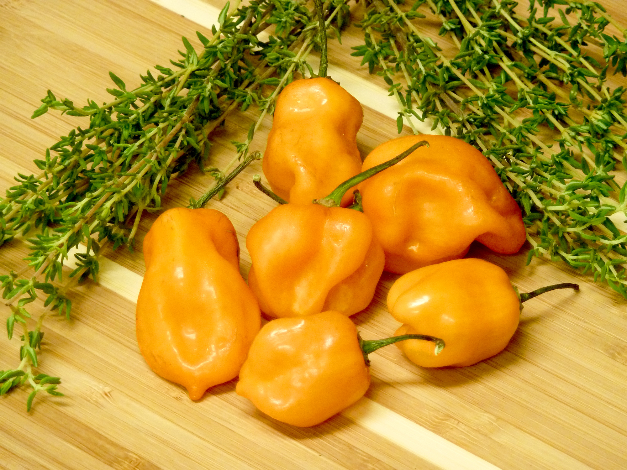 The wicked hot Scotch bonnet chile pepper is ranked a 9 on the Scoville Chile Heat Chart.