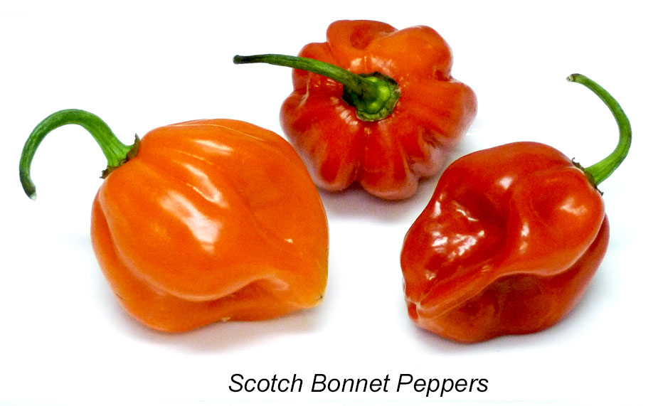 Scotch bonnet peppers are a popular ingredient in the Caribbean.